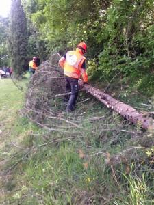 taglio alberi al pallaio