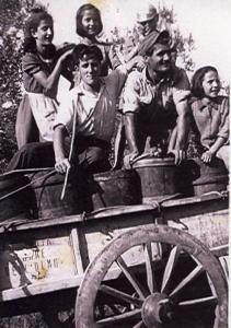 1950, vendemmia al Podere La Strada, Olmo